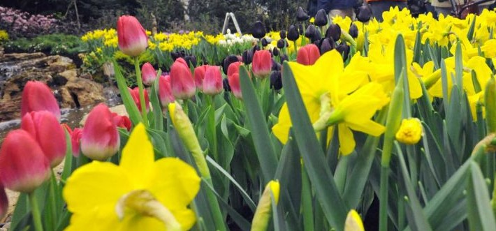 HVCC hosts garden, flower show